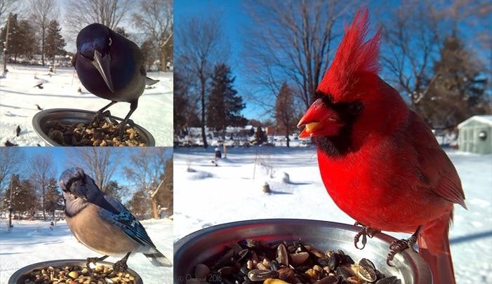 Ptačí foto krmítko Bird Photo Booth 2.0 nejen proornitology