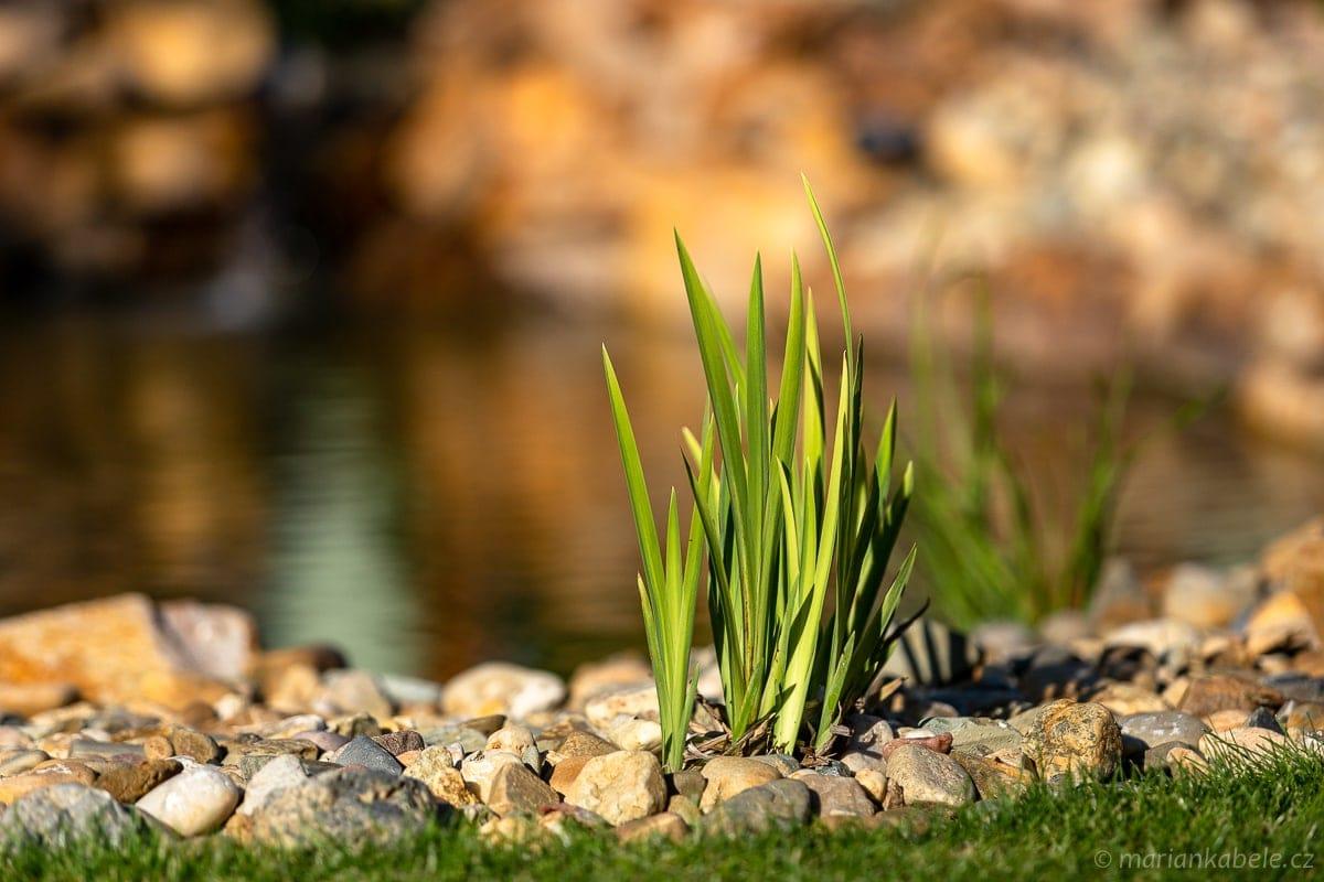 Fotografie zahradního jezírka.