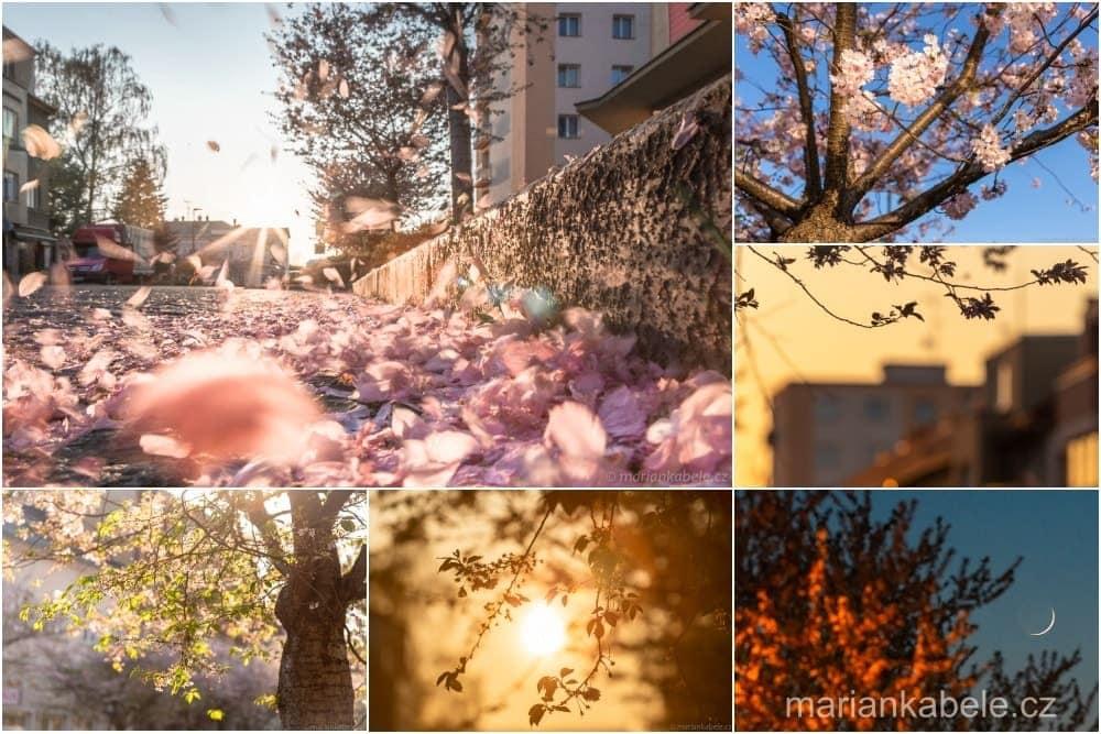 Fotopoutník: Slunce iMěsíc –Den podkvetoucími sakurami vTurnově