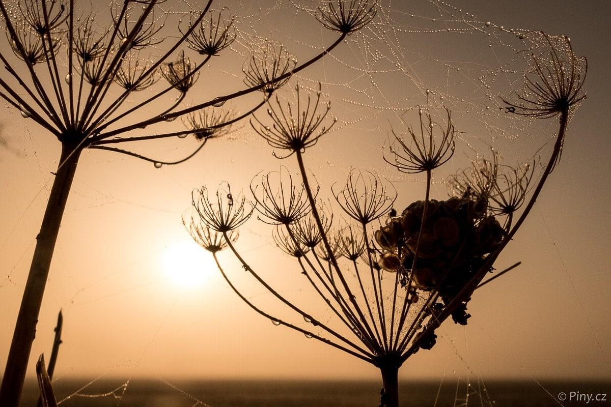 Fotopoutník: Mlhavé slunečné ráno napolích